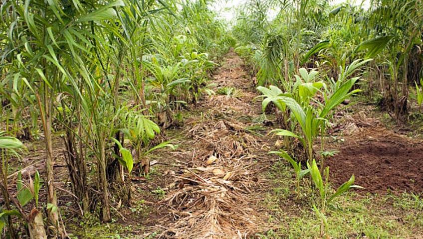 industria-agricola-obtem-reducao-de-condenacao-por-trabalho-degradante-na-amazonia